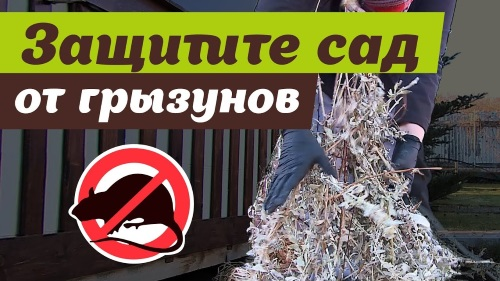 Защитите сад от грызунов