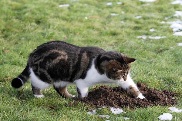 Кошка ловит кротов