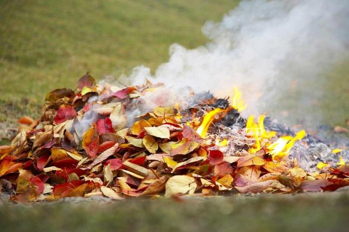 Сжигание листвы